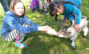 Feeding lambs Spring 2014WEB
